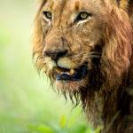 South Africa Singita