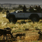 Tswalu South Africa Game Drive